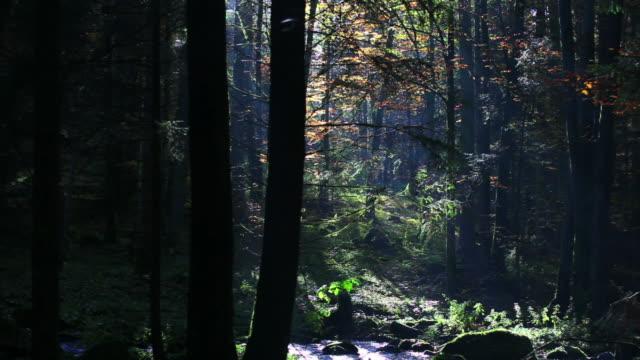 HD Stream in Autumn Forest (Panning) Panning right of stream in autumn forest.  Shot with LEICA Vario-Apo-Elmarit-R 70-180mm f/2.8 lens. wasser videos stock videos & royalty-free footage