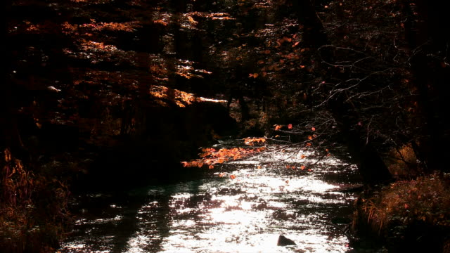 HD Stream in Autumn Forest (Loopable) Real time shot of glittering stream in autumn forest (loopable). wasser videos stock videos & royalty-free footage