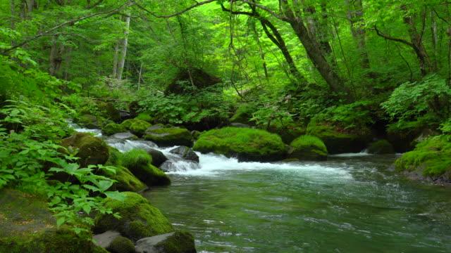 stream in green forest - oirase river,aomori - muschio flora video stock e b–roll