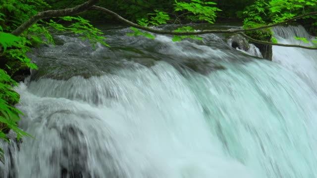 緑の森の奥入瀬川、青森でストリーム - 湧水点の映像素材/bロール