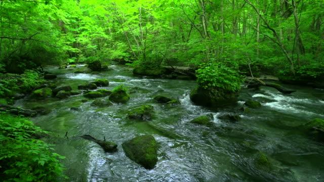 緑の森の奥入瀬川、青森でストリーム - 清潔点の映像素材/bロール