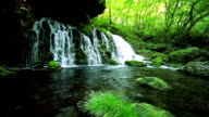 istock Stream in green forest 177247001