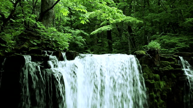 Stream in green forest video