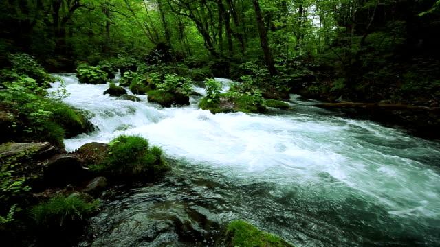 stream in green forest - akan su stok videoları ve detay görüntü çekimi