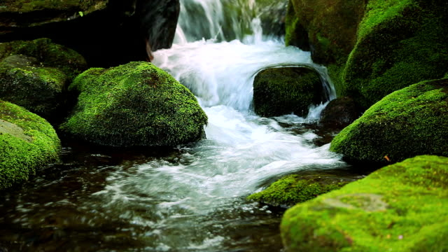 stream in green forest - spring stock videos & royalty-free footage