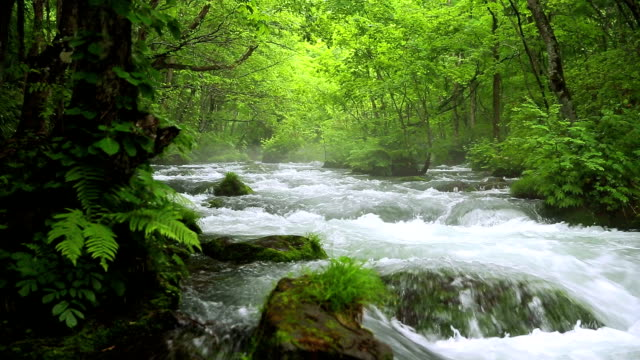 Stream in green forest,Dolly Shot video