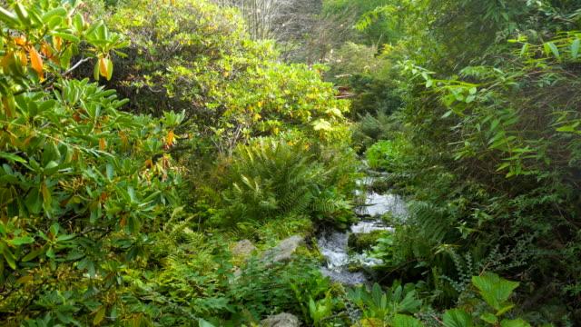 Stream in Royal Botanic Garden of Edinburgh video