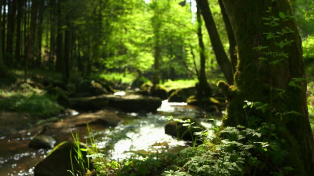 stream in spring forest dolly shot - forest stock videos and b-roll footage