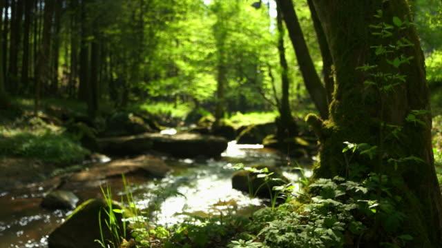 stream in spring forest съёмка с операторской тележки - река стоковые видео и кадры b-roll