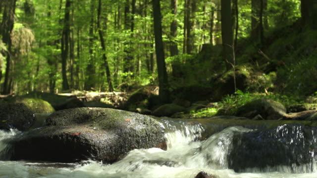 hd-поток in spring forest - ручей стоковые видео и кадры b-roll