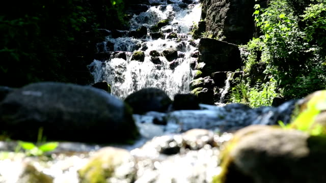 Stream in spring forest video