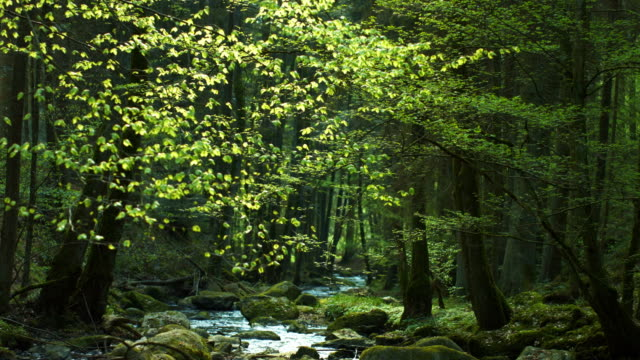 Stream In Spring Forest Real time shot made in 4K/Ultra High Definition. natural condition stock videos & royalty-free footage