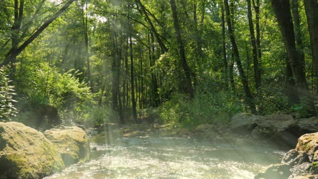 güneş ışınları ile orman akışında - akan su stok videoları ve detay görüntü çekimi