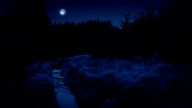 Stream Through Forest With Moon