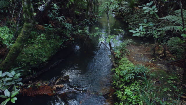 Stream Through New Zealand Forest video
