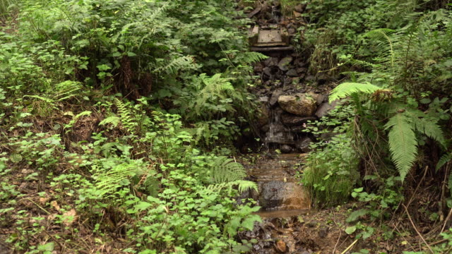 A stream with a rocky channel and a waterfall in a wild forest