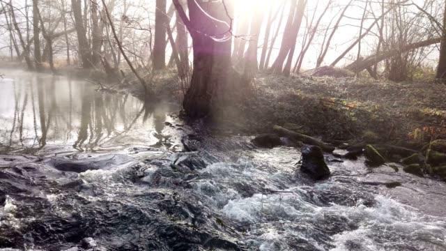 stream with fog in winter - albero spoglio video stock e b–roll