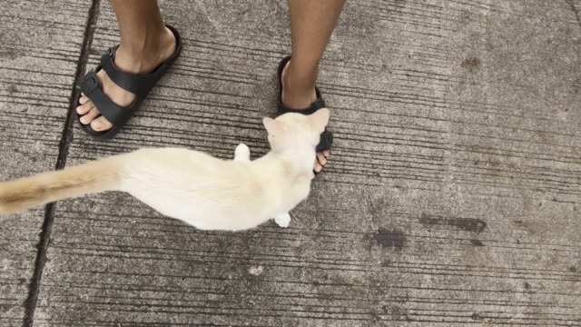 Street Cat rub against the legs