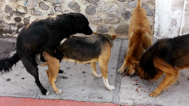 street dog copulates - dog stock videos and b-roll footage