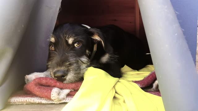 calle perro cachorro dormitorio - vídeo