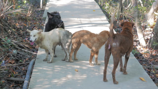 Street dogs mating - vídeo