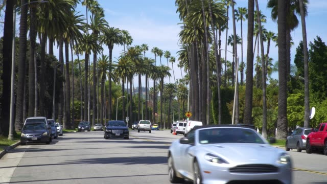 Street In Beverly Hills Lined With Palm Trees - Establishing Shot Palm trees line the streets of Beverly Hills as fancy cars drive in both directions. b roll stock videos & royalty-free footage