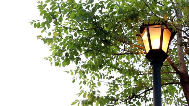 street light under trees - cisza filmów i materiałów b-roll
