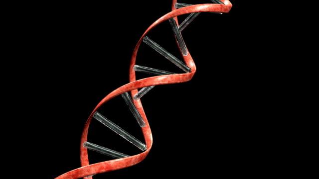 DNA string fractured video