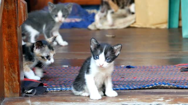 ストライプの猫、猫 - 子猫点の映像素材/bロール