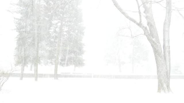 сильный ветер и снег в парке. - ноябрь стоковые видео и кадры b-roll