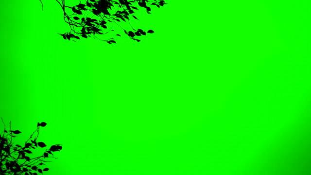 прочные ветерком на дерево хромакей - куст стоковые видео и кадры b-roll