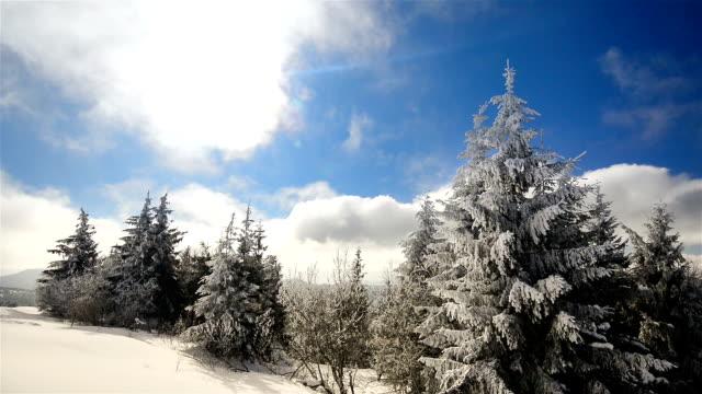 сильный зимой солнце - хвойное дерево стоковые видео и кадры b-roll