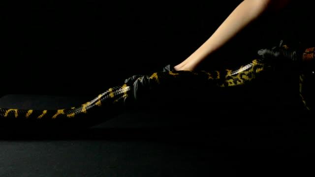 Strong yellow anaconda video