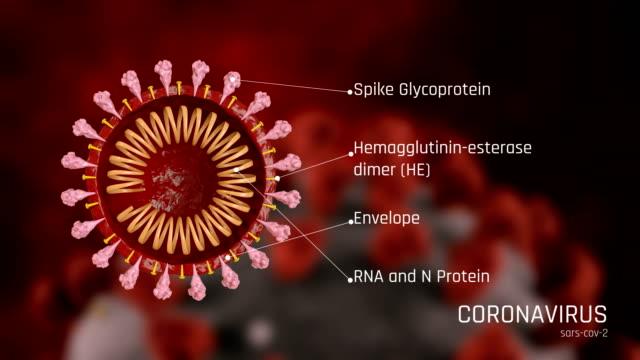 Struktur des Coronavirus, COVID-19 – Video