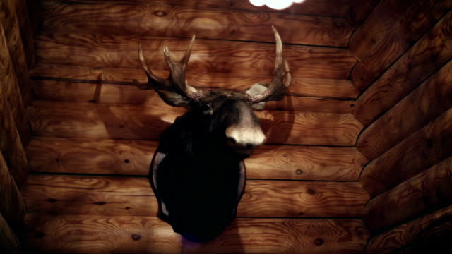 A stuffed animal on the wall A stuffed animal on the wall, moose head, log house stuffed stock videos & royalty-free footage