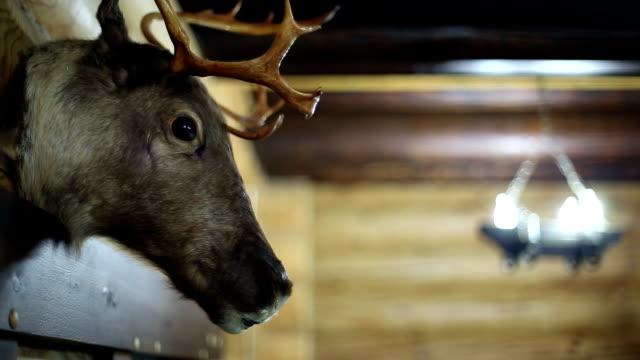 A stuffed animal on the wall A stuffed animal on the wall, deer head, log house stuffed stock videos & royalty-free footage