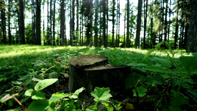 Stump video