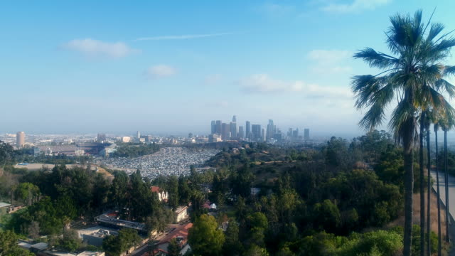Stunning drone shot of palm tree downtown Los Angeles, California - 4K UHD video
