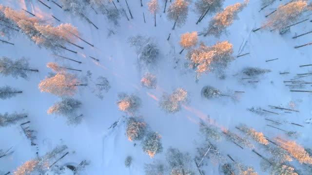 aerial uppifrån och ner: fantastisk granskog täckt av nysnö på vintern sunset - finland bildbanksvideor och videomaterial från bakom kulisserna