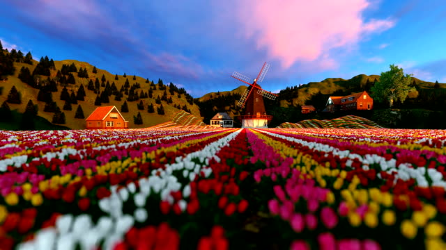 Stunning Traditional Windmill And Field Of Tulips video