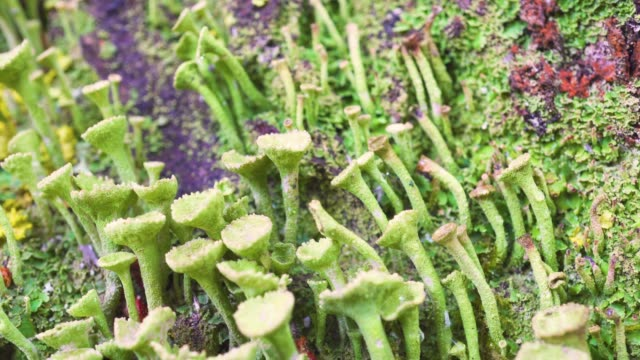 Stunning, unusual beauty of the wild forest. Exotic moss and fungi close macro.