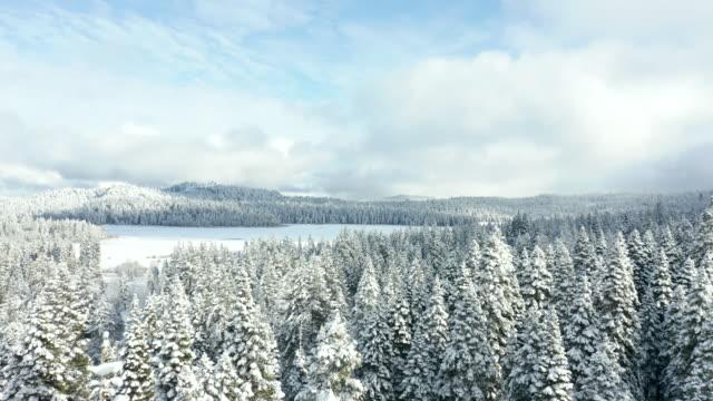 vidéos et rushes de vue imprenable volant à côté de treetop avec le lac gelé à l'arrière-plan - neige éternelle