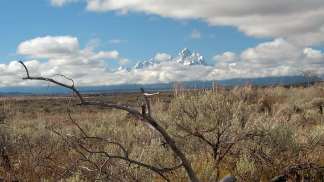 CLOSE UP: Stunning wilderness of vast green fields and pointy Rocky Mountains video
