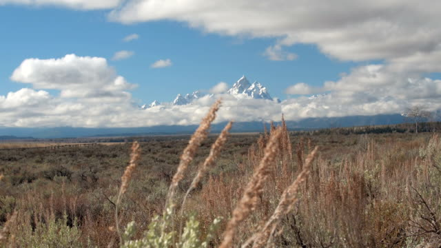 CLOSE UP: Stunning wilderness of vast green fields and snowy Rocky Mountains video