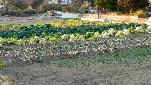 suburban vegetable garden - stelo video stock e b–roll
