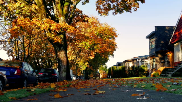 Suburbs In The Fall With Leaves Covering Ground video