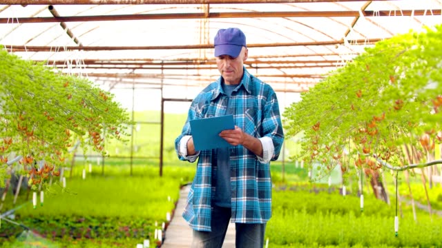 Successful gardener planting flowers, agriculture, farmer, greenhouse.