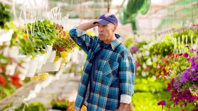 vídeos y material grabado en eventos de stock de exitoso jardinero siembra flores, agricultor, agricultura, invernadero. - botánica