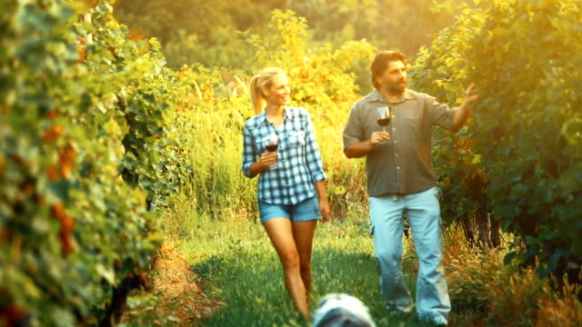 Successful winemaking business. video