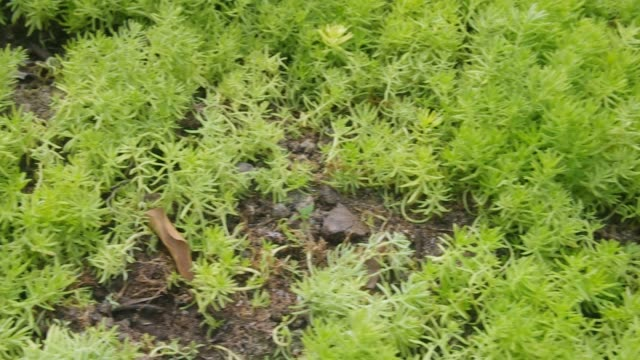 succulent plant mat on the ground video